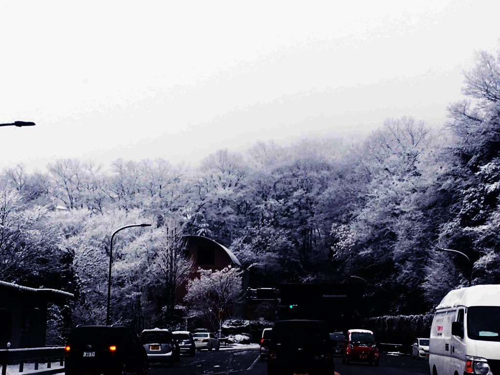 beauty_of_snow
